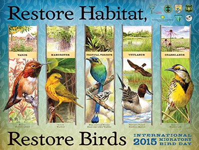 International Migratory Bird Day Poster
